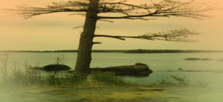 single tree by the water 4